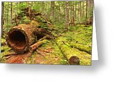 Fallen Rainforest Giant Greeting Card