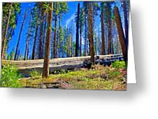 Fallen Sequoia In Mariposa Grove In Yosemite National Park-california Greeting Card