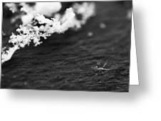 Fallen Star Greeting Card