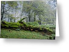 Fallen Stump Greeting Card