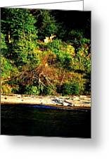Fallen Tree On The Shore Greeting Card