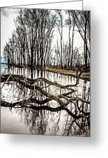 Fallen Tree Reflection Greeting Card