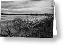 Fallen Trees At The Lake Greeting Card