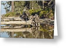 Fallen Trees Reflected In A Beach Tidal Pool Greeting Card