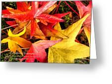 Falling Colors Fall Leaves Greeting Card