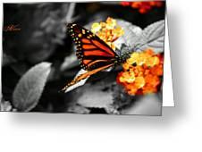 Falling Colors Greeting Card