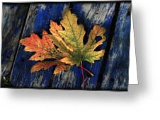 Falling For Colour Greeting Card