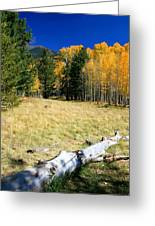 Falling In Flagstaff Greeting Card