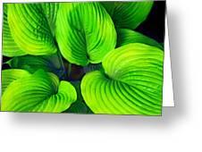 Falling Into Green Greeting Card