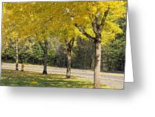 Falling Leaves From Neighborhood Beech Trees Greeting Card