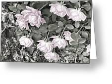 Falling Roses Greeting Card
