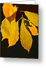 Fall's Purest Gold Greeting Card