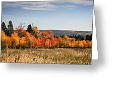 Fall's Splendor - Casper Mountain - Casper Wyoming Greeting Card