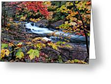 Falltime In Algonquin Greeting Card