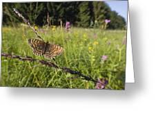 False Heath Fritillary In Meadow Bavaria Greeting Card