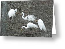 Family Affair Egrets Louisiana Greeting Card