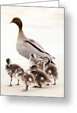 Family Of Ducks Greeting Card