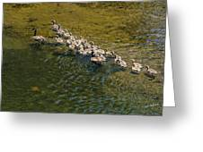 Family Of Geese On The Rogue River Greeting Card