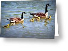 Family Of Geese Out For A Swim Greeting Card