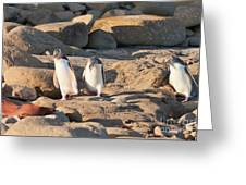 Family Of Nz Yellow-eyed Penguin Or Hoiho On Shore Greeting Card