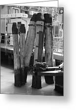 Family Of Pilings Greeting Card