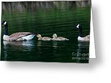 Family Swim Greeting Card