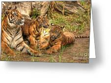 Tiger Family Greeting Card
