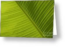Fan Of Green 2 Greeting Card