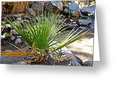 Fan Palm Leaf Over Andreas Creek In Indian Canyons-ca Greeting Card