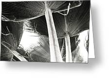 Fan Palm Greeting Card by Lisa Cortez