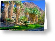 Fan Palms By The Creek In Lower Palm Canyon In Indian Canyons Near Palm Springs-california Greeting Card