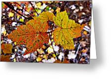 Fancy Fall Leaves Greeting Card