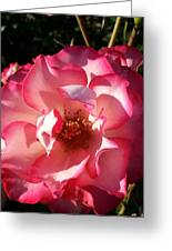 Fancy Flaminco Rose Greeting Card