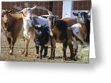 Fancy Goats Greeting Card