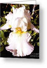 Fancy Lady White Iris Greeting Card
