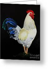 Fancy Tail  Rooster Greeting Card