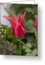 Spiky Tulip Greeting Card