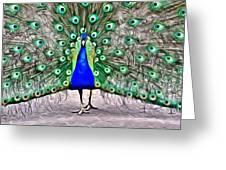 Fanning Peacock Greeting Card