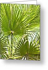 Tropical Fans Greeting Card