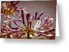 Fantastic Bloom Greeting Card