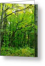 Fantastic Forest Greeting Card