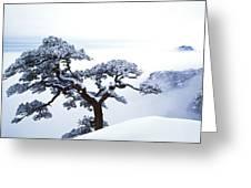 Fare-well Pine Tree Greeting Card
