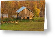 Farm At Sunrise Greeting Card