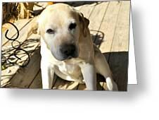 Farm Dog Greeting Card