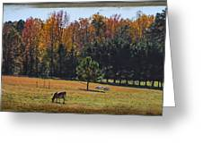 Farm Journal - Grazing Greeting Card