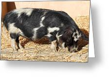 Farm Pig 7d27356 Greeting Card