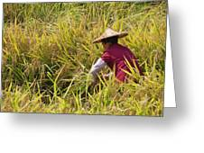 Farmer Harvesting Rice On The Terrace Greeting Card