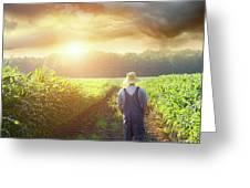 Farmer Walking In Corn Fields At Sunset Greeting Card by Sandra Cunningham