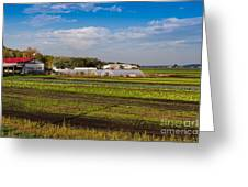Farmer's Market And Green Fields Greeting Card
