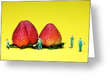Farmers Working Around Strawberries Greeting Card